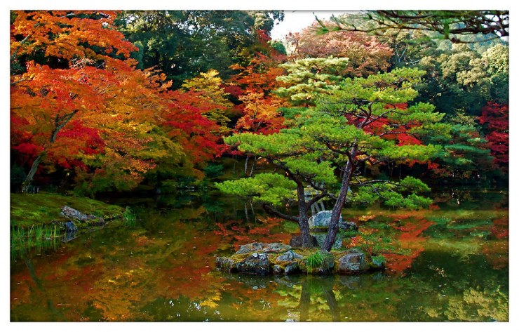 Backyard Japanese Garden (24)
