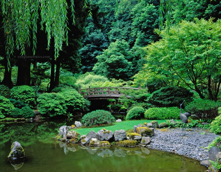 Backyard Japanese Garden (27)