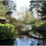 Creating Your Own Japanese Garden (2)