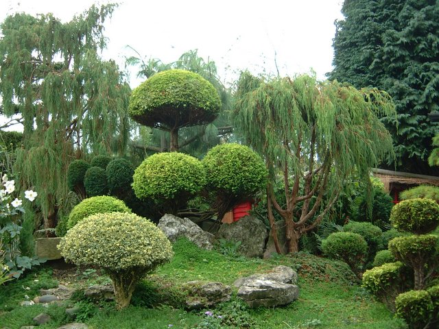 How to Build a Japanese Garden (1)