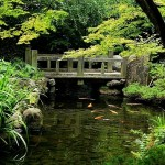 Japanese Garden Bridge (19)