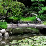 Japanese Garden Bridge (21)