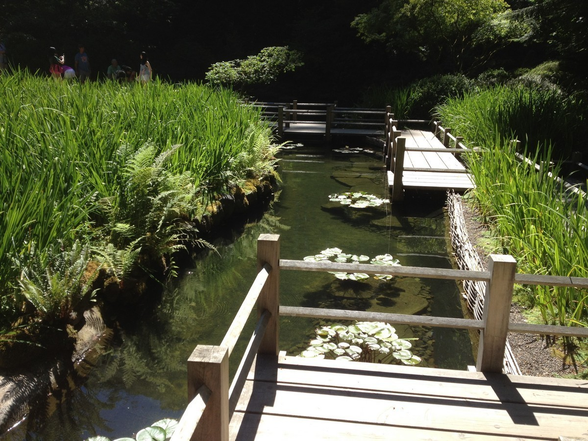 Japanese Garden Bridge (24)