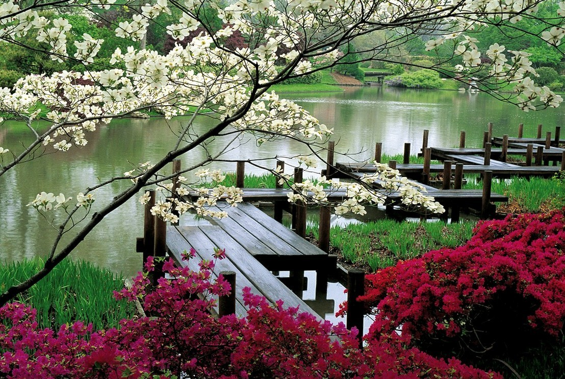 Japanese Garden Bridge (32)