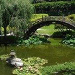 Japanese Garden Bridge (34)
