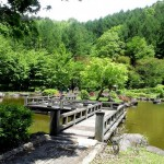 Japanese Garden Bridge (38)