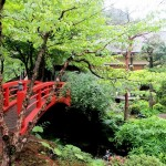 Japanese Garden Bridge (47)