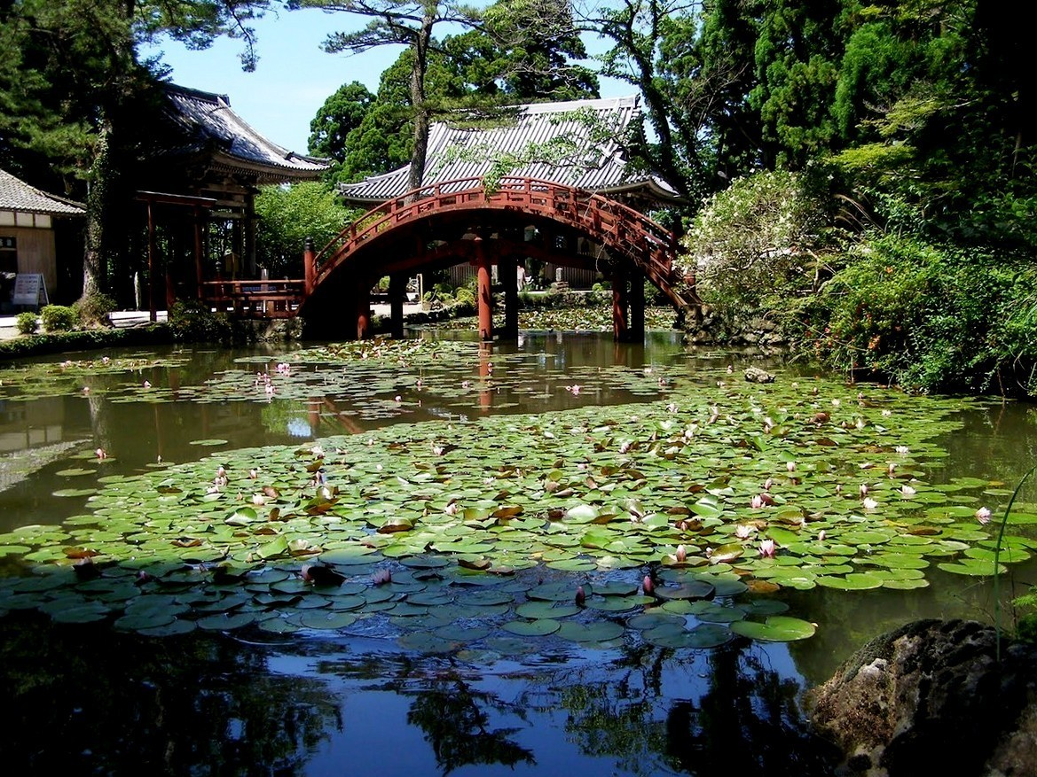 Japanese Garden Bridge (48)