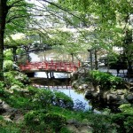 Japanese Garden Bridge (50)