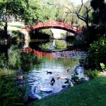 Japanese Garden Bridge (56)