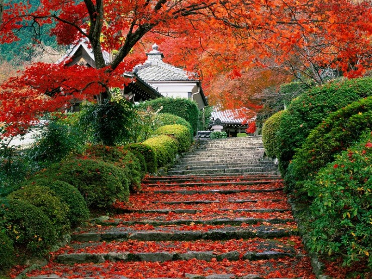 Japanese Garden Design Ideas (8)