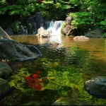 Japanese Garden Waterfall (6)