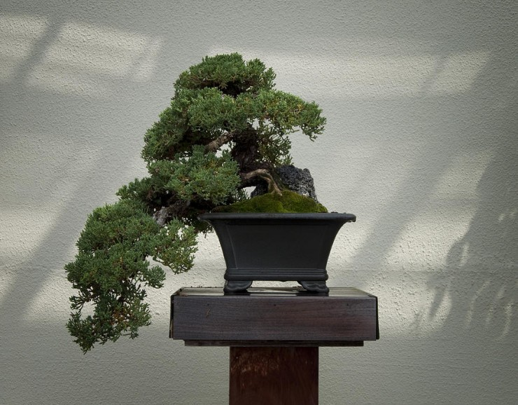 Nature of Japanese Garden Art (24)