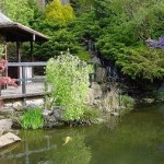 Rhododendrons and Azaleas For Your Japanese Garden (13)