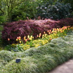 Rhododendrons and Azaleas For Your Japanese Garden (17)
