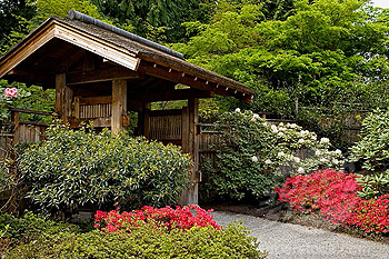 Rhododendrons and Azaleas For Your Japanese Garden (23)