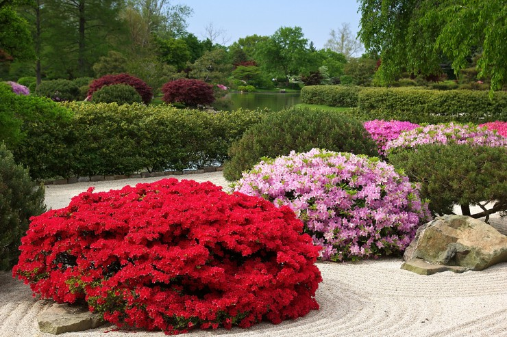 Rhododendrons and Azaleas For Your Japanese Garden (25)