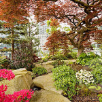Rhododendrons and Azaleas For Your Japanese Garden (26)