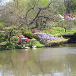 Rhododendrons and Azaleas For Your Japanese Garden (30)