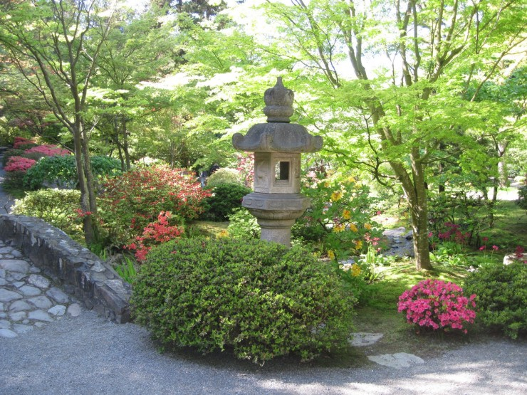 Rhododendrons and Azaleas For Your Japanese Garden (34)