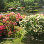 Rhododendrons and Azaleas For Your Japanese Garden (35)