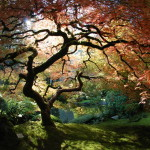 The Art of the Japanese Garden (7)