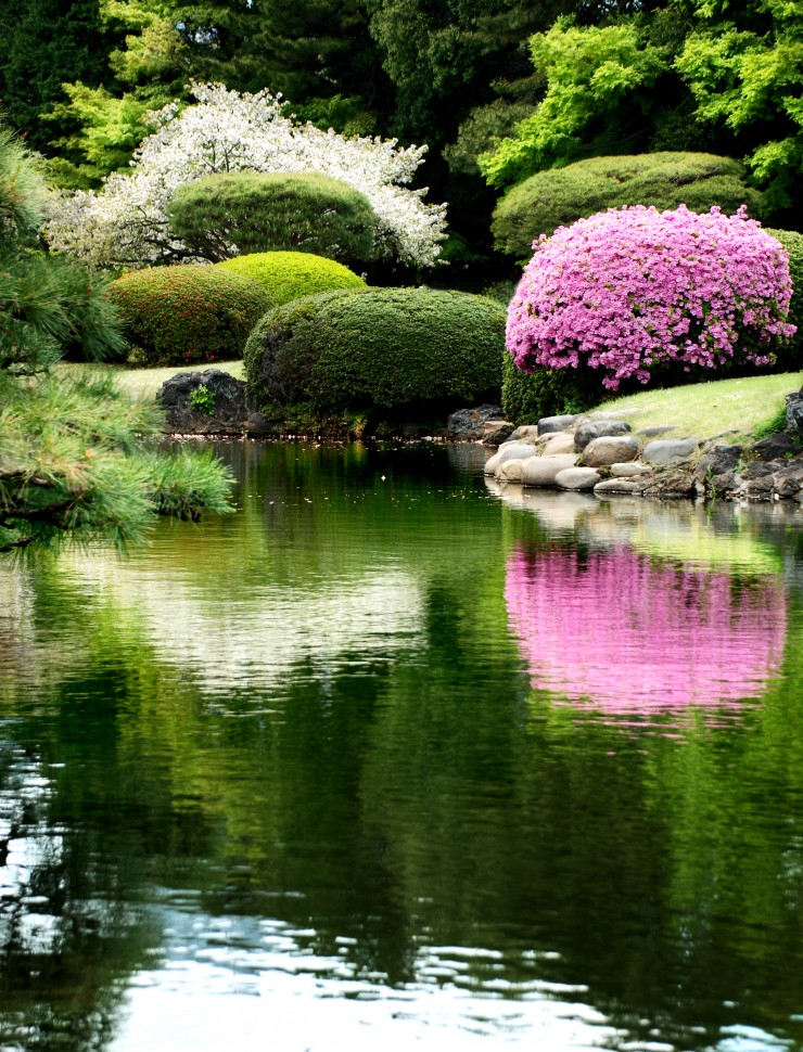 The Tranquil Japanese Garden (10)