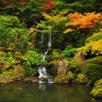 The Tranquil Japanese Garden (16)