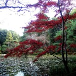 The True Spirit of Japanese Gardens (6)