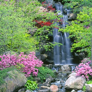 Tips for Japanese Garden Design (4)