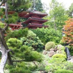 Traditional Japanese Garden (1)