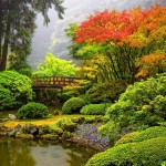 Traditional Japanese Garden (13)