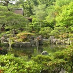 Traditional Japanese Garden (5)