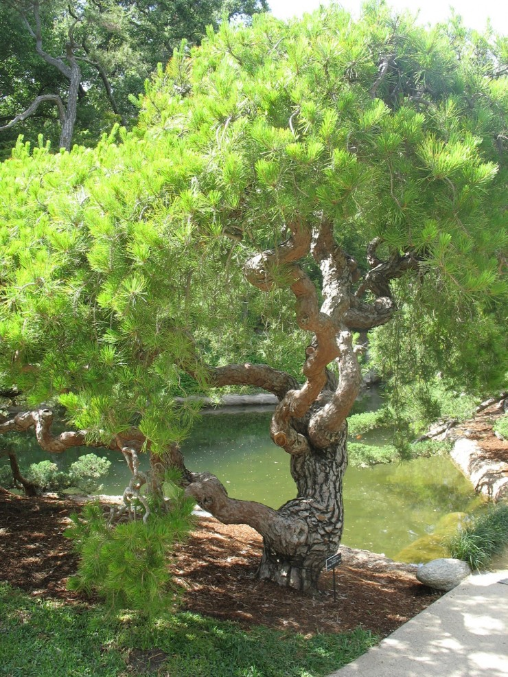 Various Japanese Garden Structures (11)