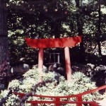 Various Japanese Garden Structures (16)