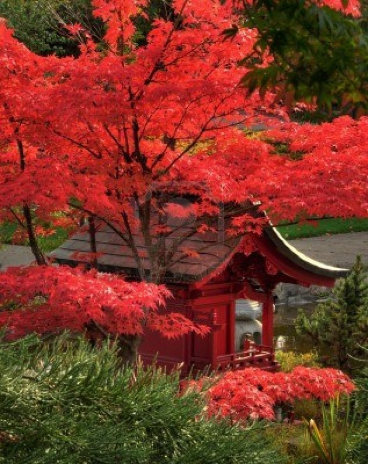 Various Japanese Garden Structures (30)